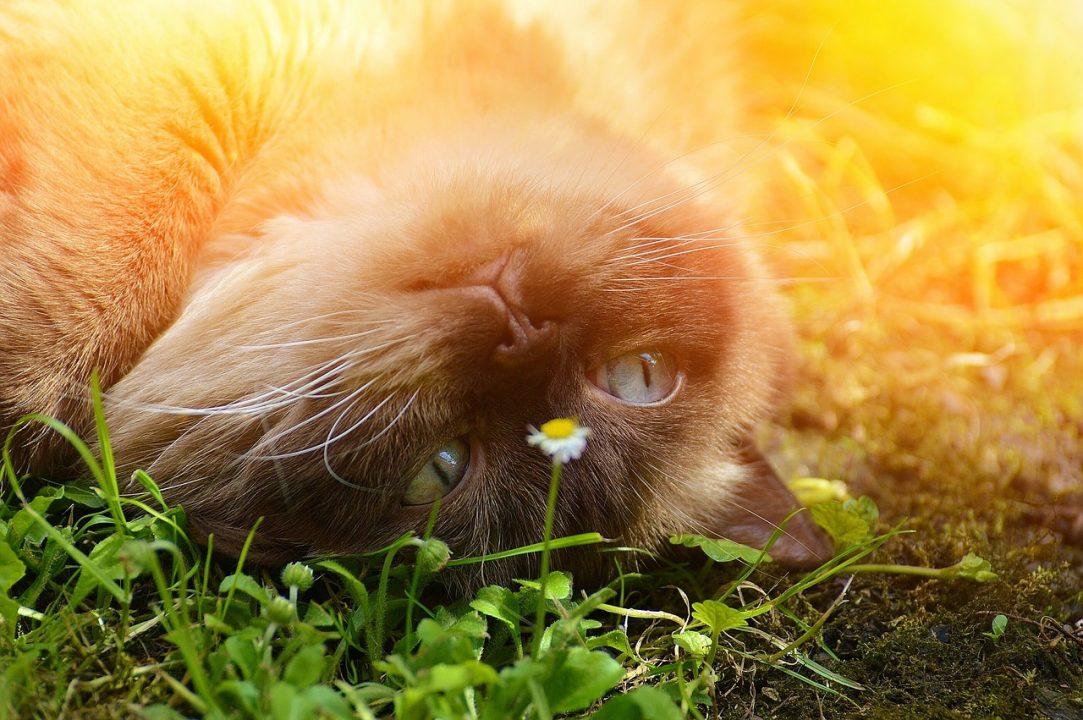 Energetische Tierheilung -Beispiele aus der Praxis-