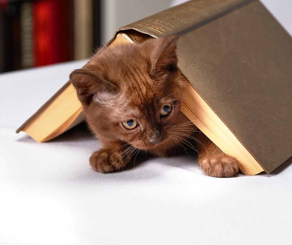 Tierkommunikation online lernen – geht das überhaupt?